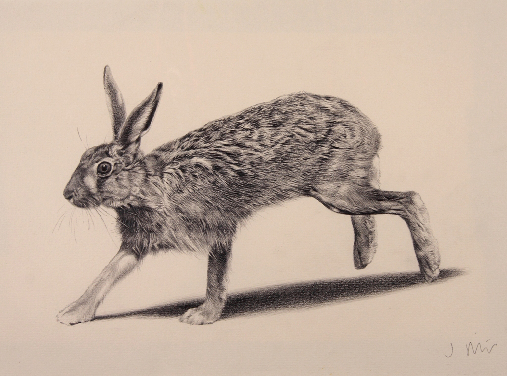 Hare illustration - photo#15